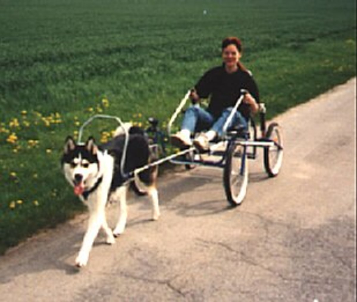 This is the ultimate dog carting experience as the sacco cart is great for all terrain and incredibly stable.