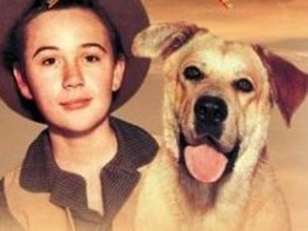 Old Yeller - Proving that shooting your childhood best friend is indeed a noble act.
