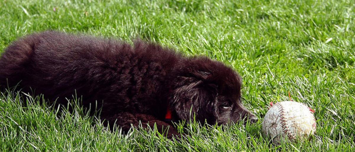 Puppy fluff.