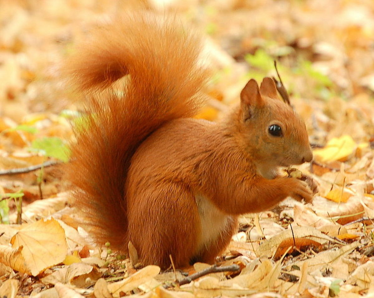 the-sharing-squirrel