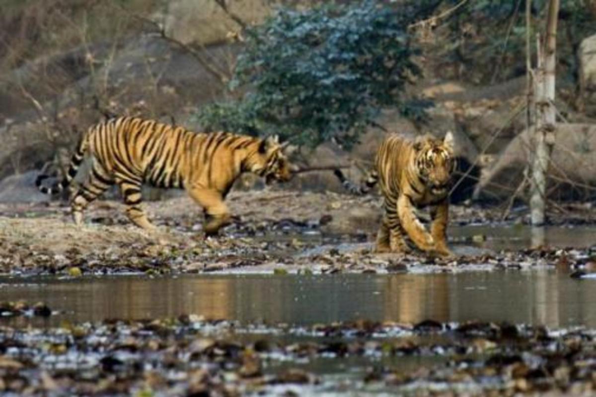 Parambikulam Wildlife sactuary