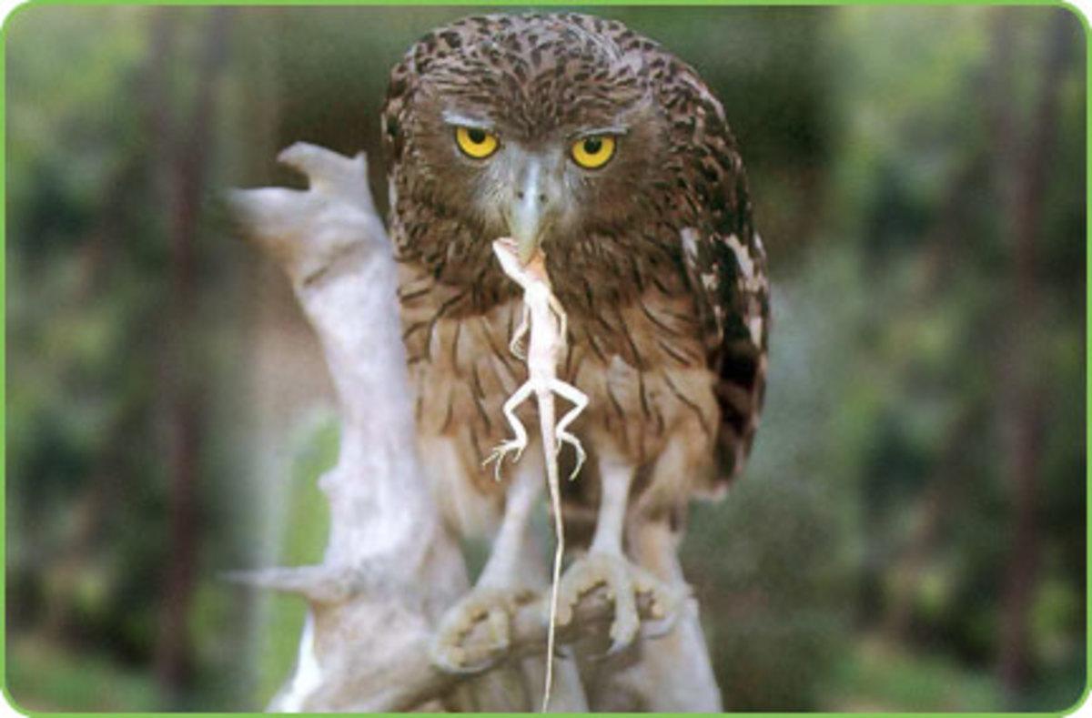 Aralam Wildlife