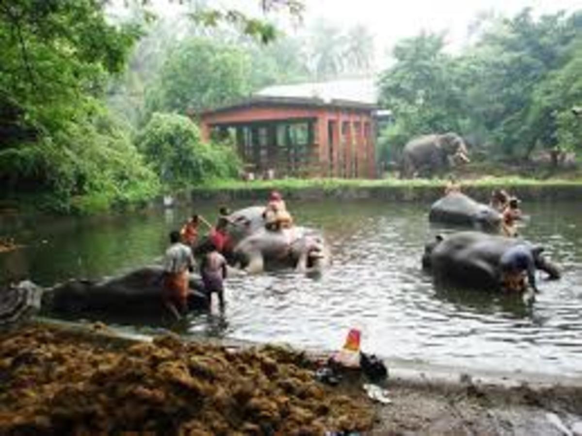Konni Elephant camp