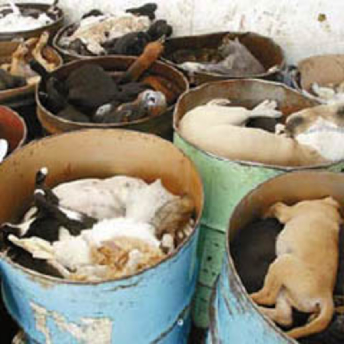 Piles of dogs and cats after being euthanized