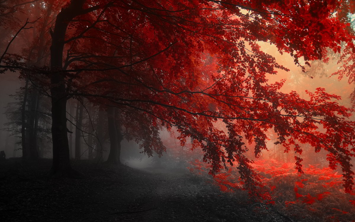 The Red Forest - radioactivity has caused the leaves to take on a red colour