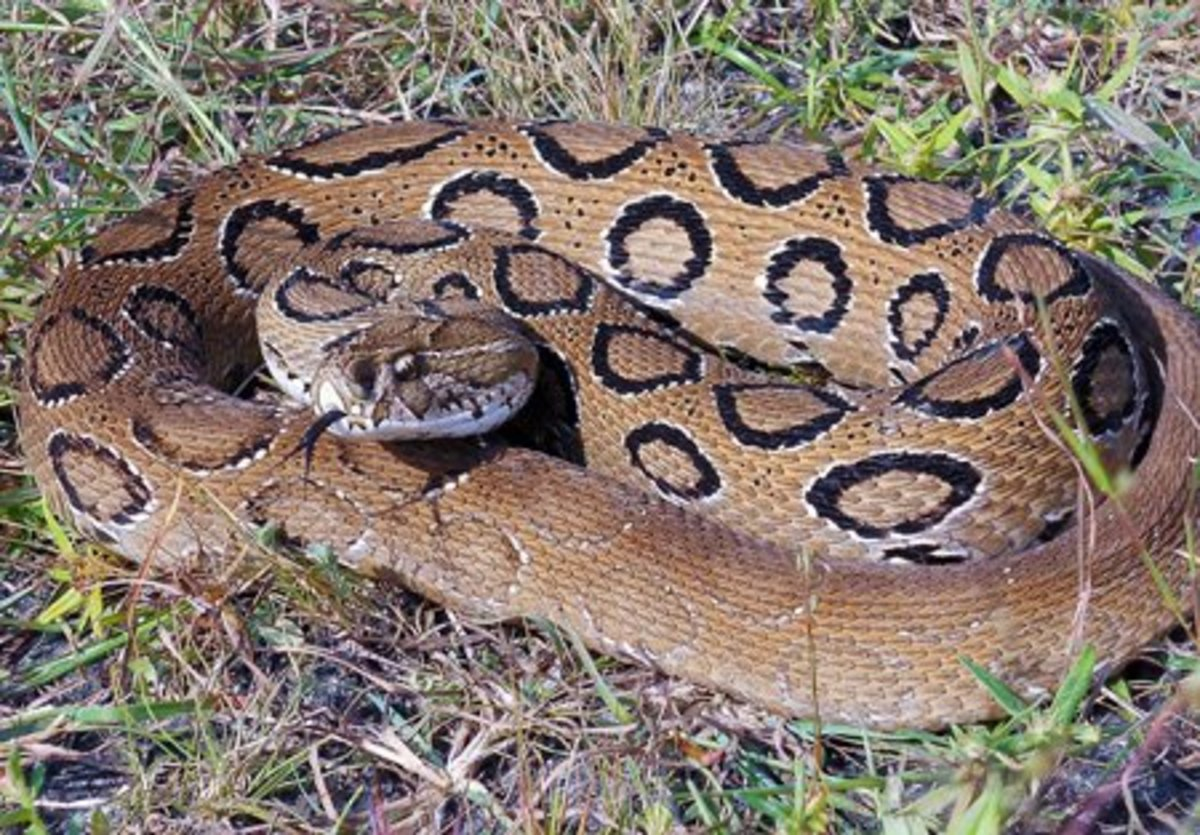 the-5-deadliest-snakes-in-the-world
