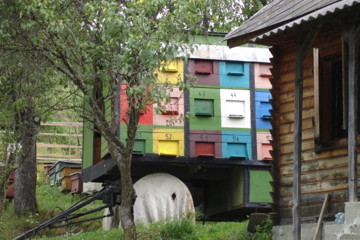 Bee Hives Photobucket. Thank you gombo.