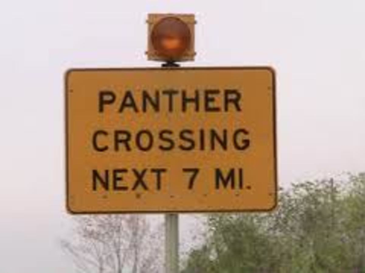 One of many panther signs placed along the hi-way to help protect the panthers.