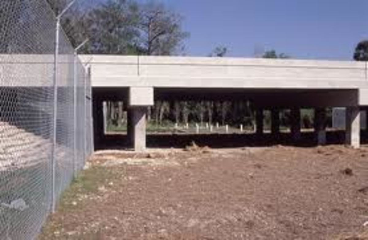 An underpass used to funnel the panthers under the hi-way instead of crossing in traffic.