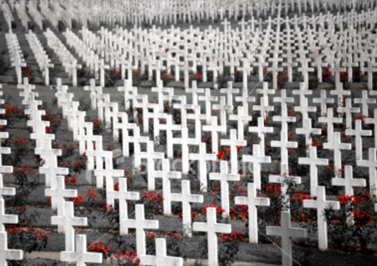 Poppies between crosses