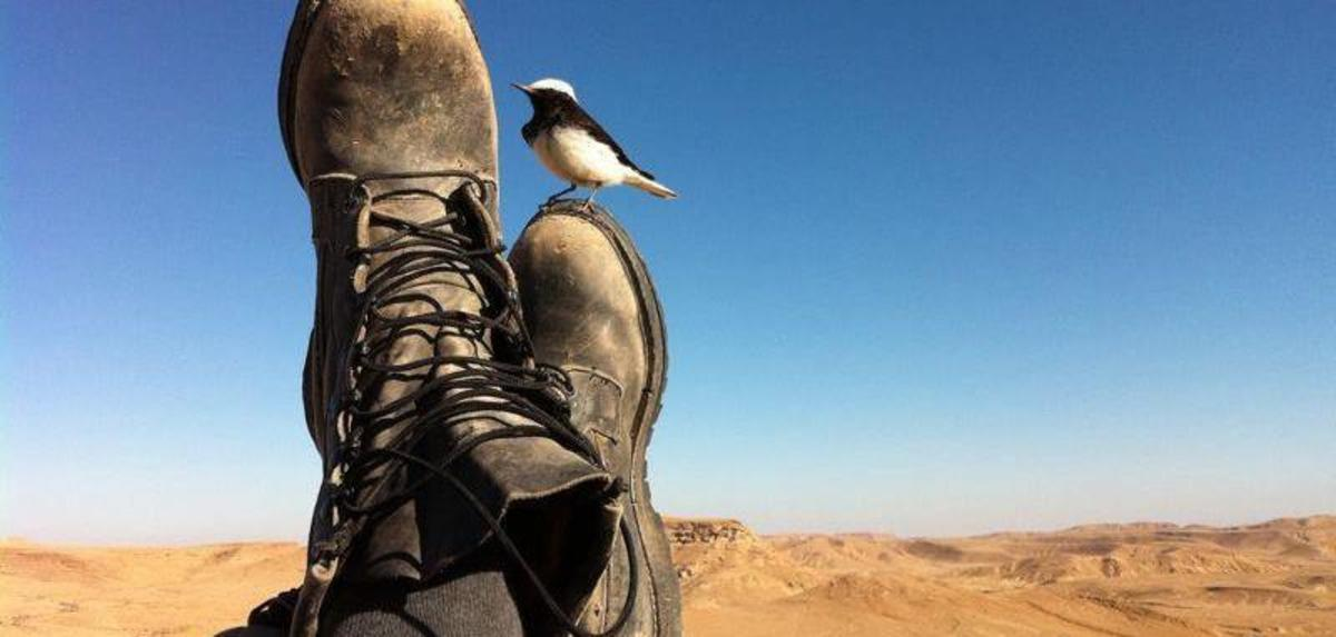 Bird on Israeli Soldier's Boot