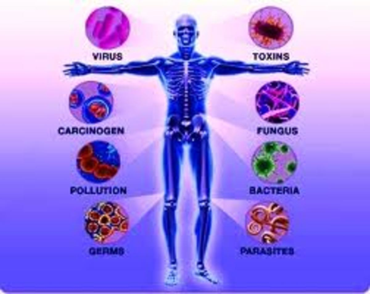 The Immune System - The Body's First Line of Defense Against Diseases