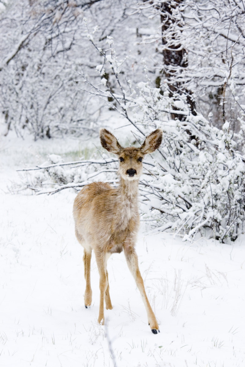 50 winter poems for adults and kids hubpages