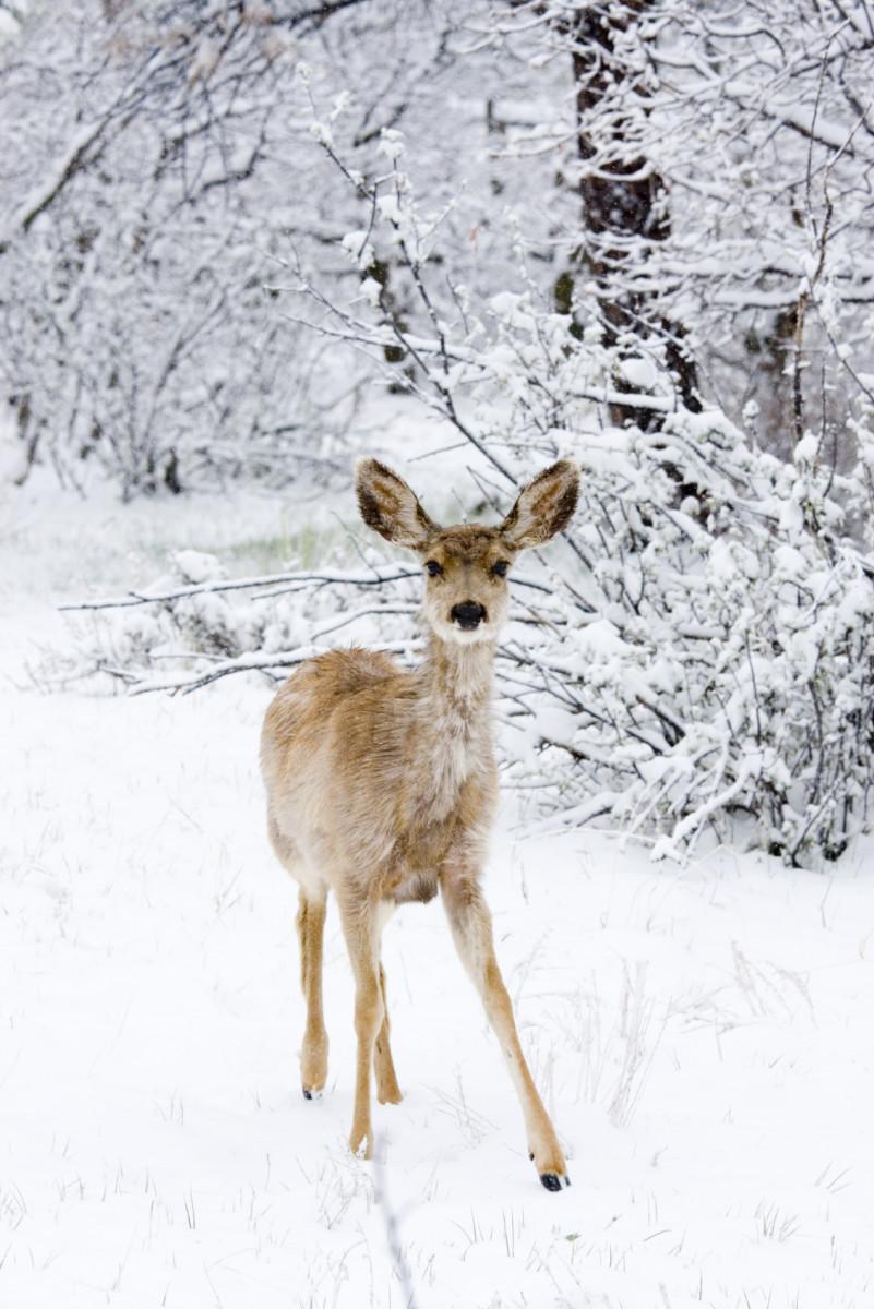 Winter is Poetry
