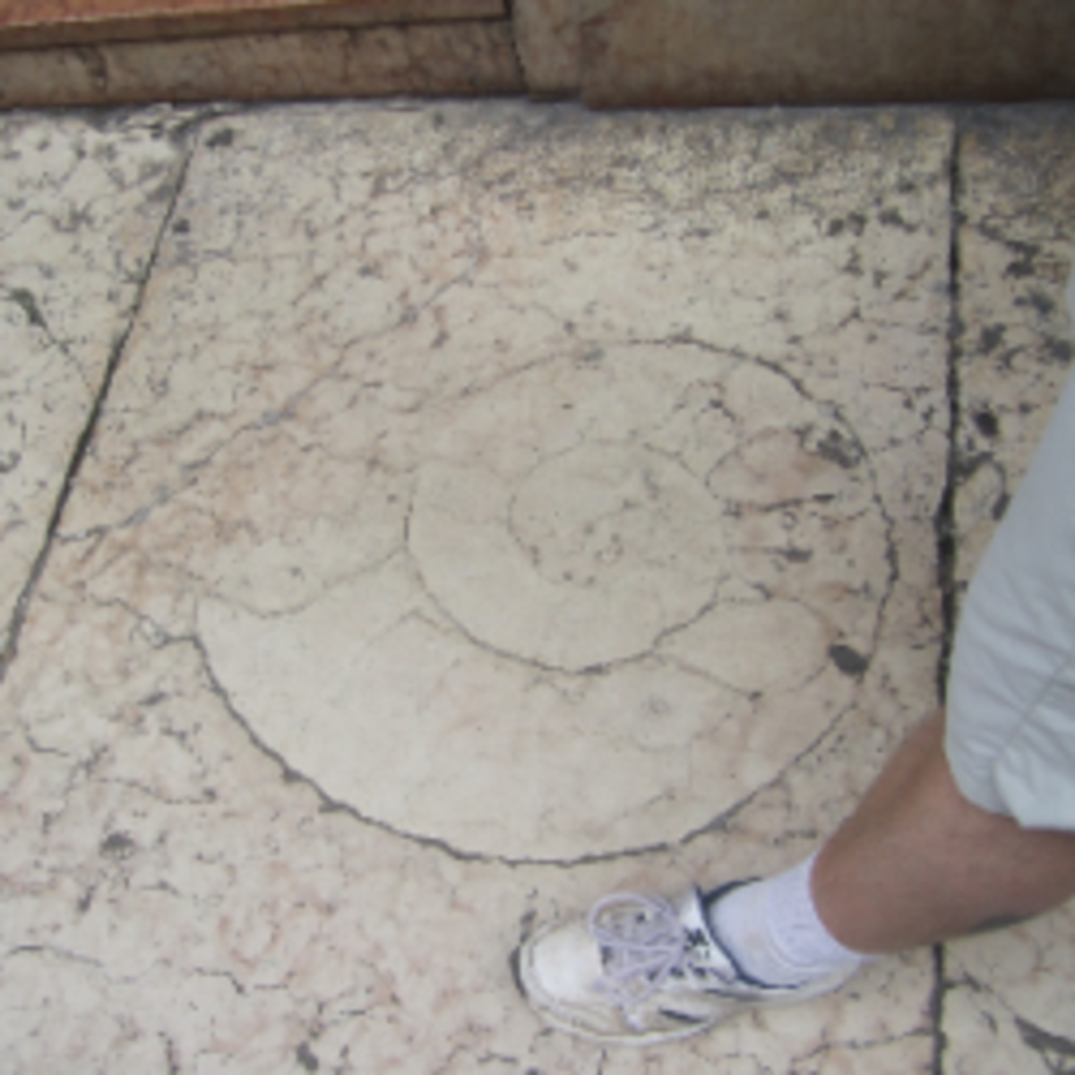 Ammonitic limestone on the sidewalk in Verona, Italy
