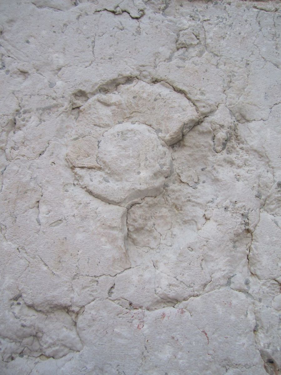 ammonitic-limestone-verona-italy