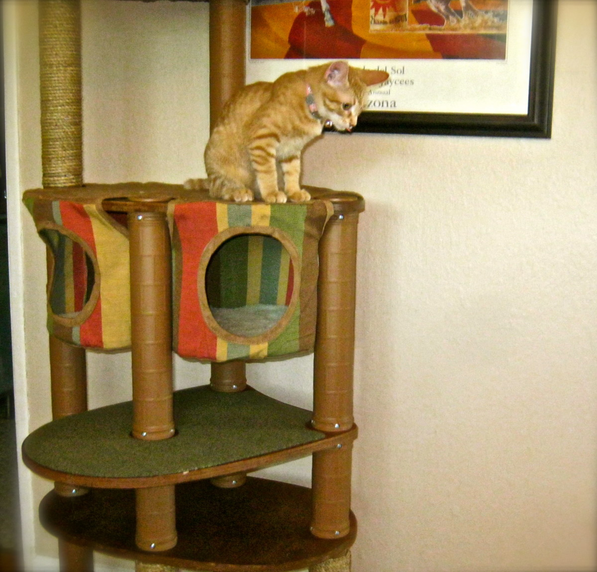 """Froggy Isabella perches above the """"Hammock Hideaway"""" feature"""