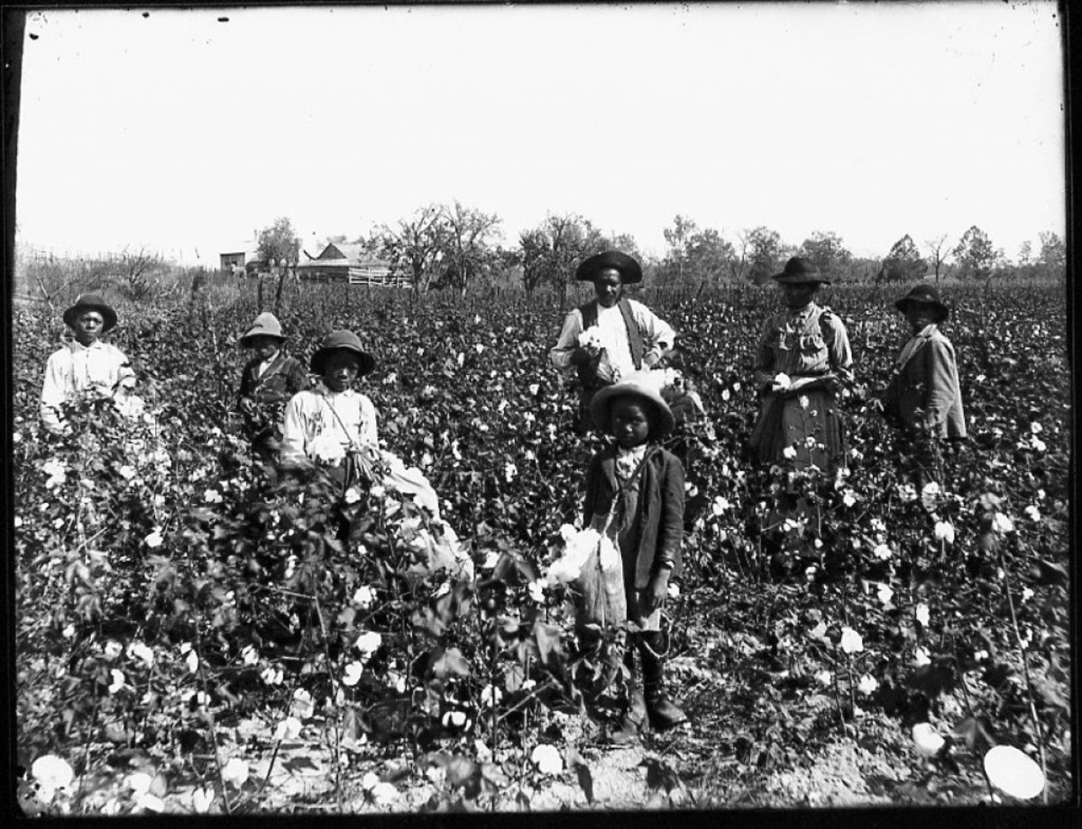 Slaves pause in their work for a photograph in the plantation's cotton field