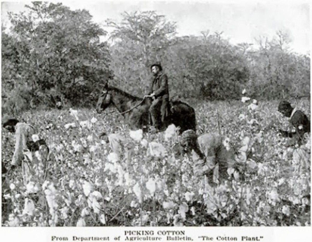 Slaves hand-pick cotton on a Southern Plantation with a mounted overseer nearby