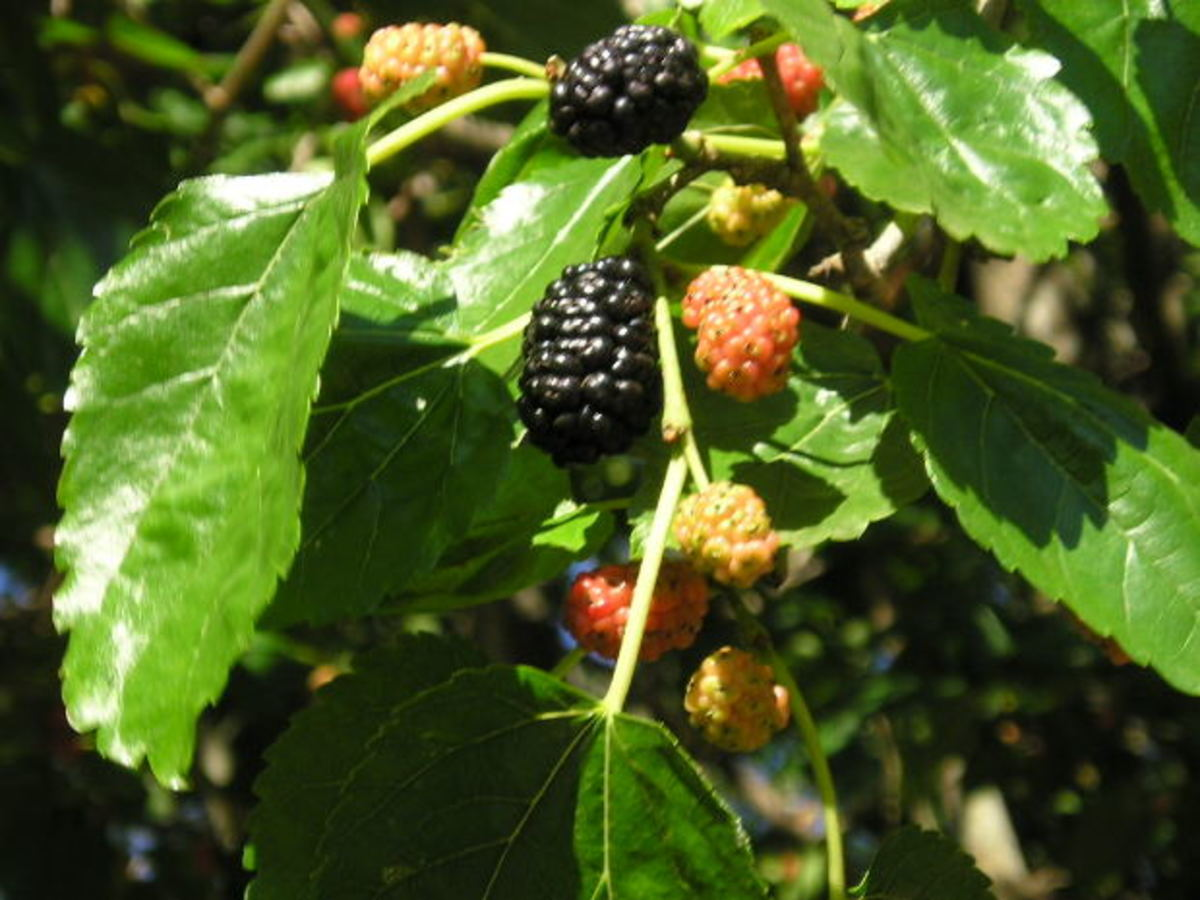 Many delicious berries contain plenty of Vitamin B17 in their seeds.