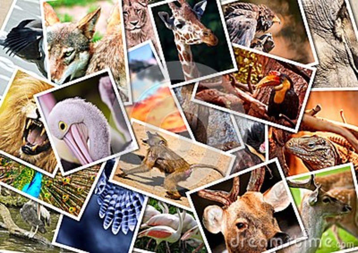 The weird, The Beautiful and Exotic Animals in the world!