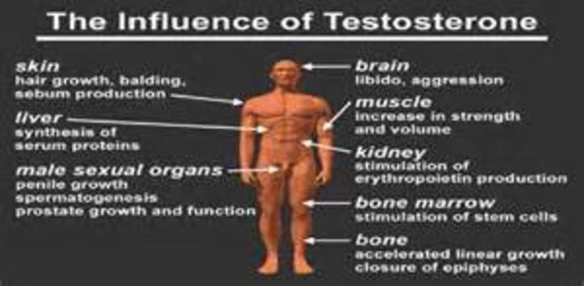 How Testosterone Effects the Body