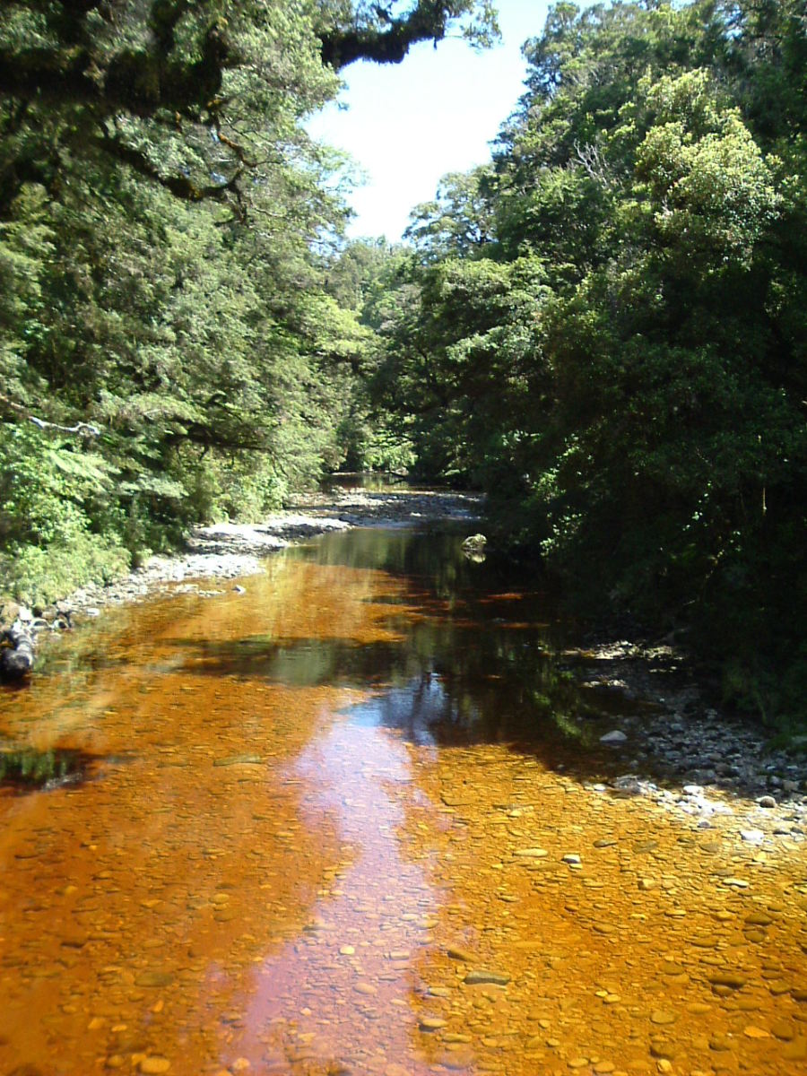 Oparara River coloured by natural tannins