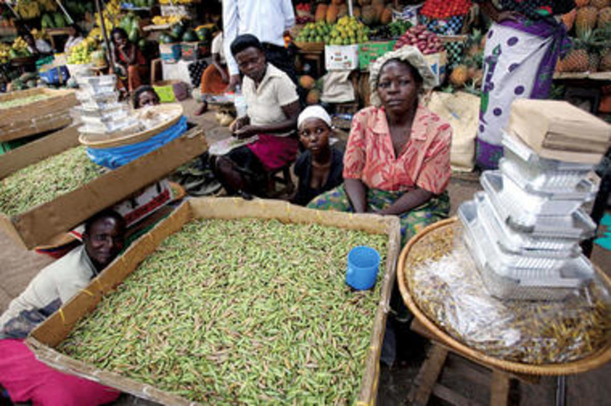 Ensenene being sold at a local market