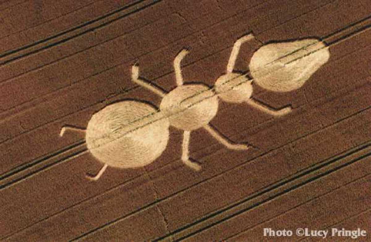 The ant crop circle