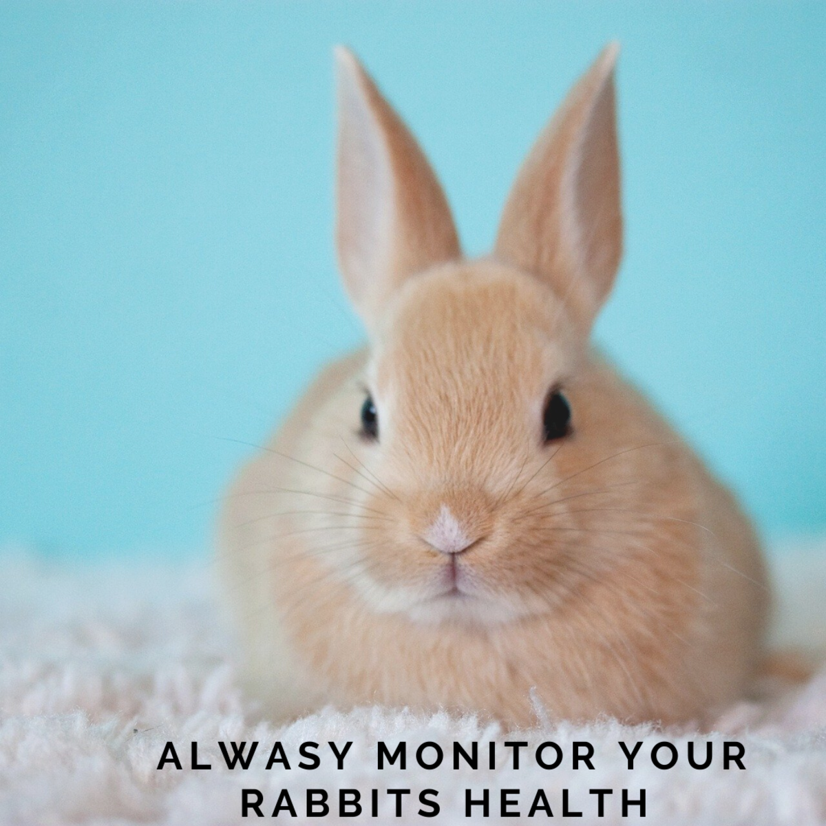 Do health checks on your bunny rabbit from the time you get one.