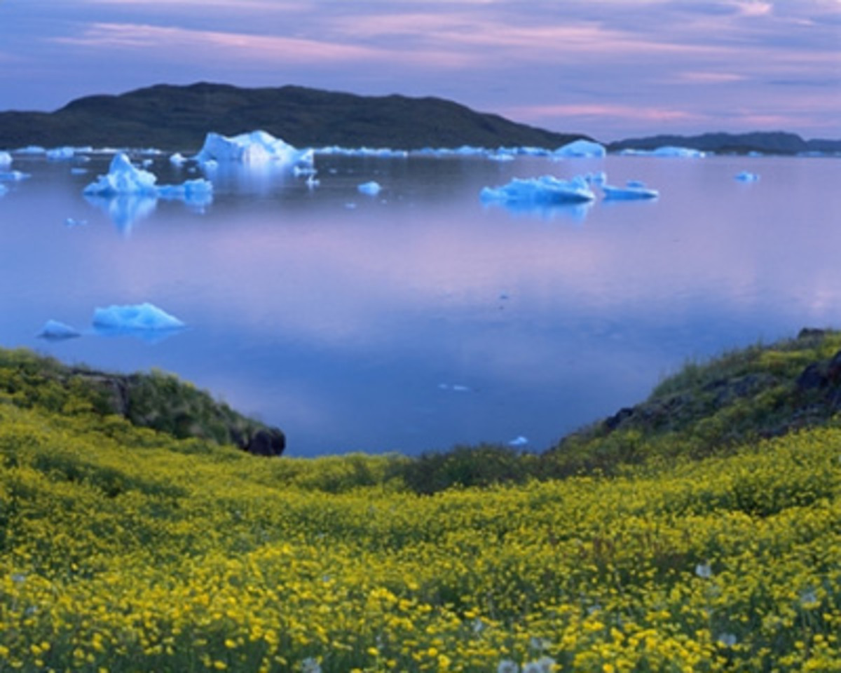 greenland-plants-animals-and-climate