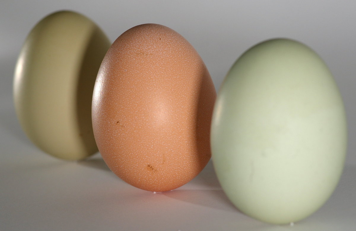 Three eggs with different colored shells
