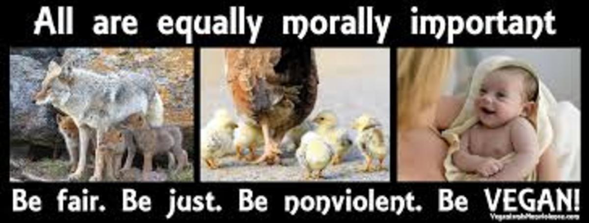 the-disgusting-side-of-veganism