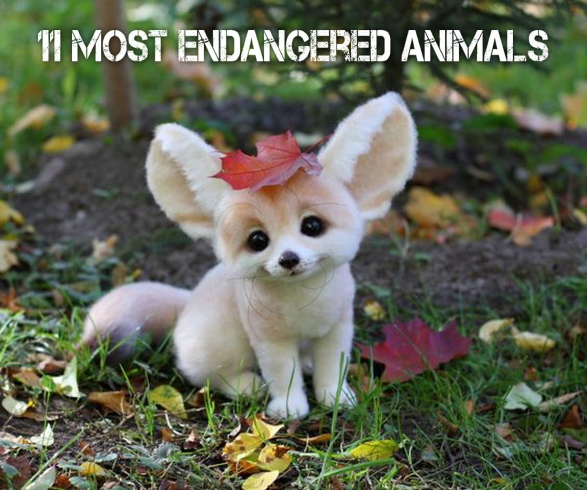 11 Most Endangered Animals