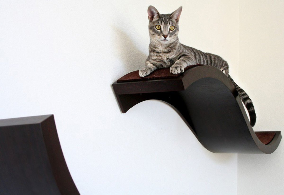 7-best-cat-towers-and-cat-houses-reviewed