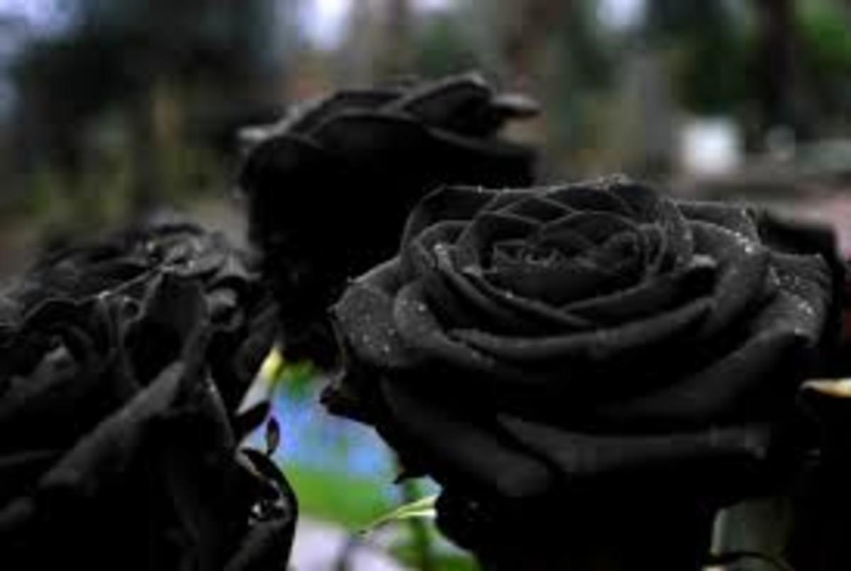 Black roses are rare and they mean death and sorrow but they also mean new beginnings and courage