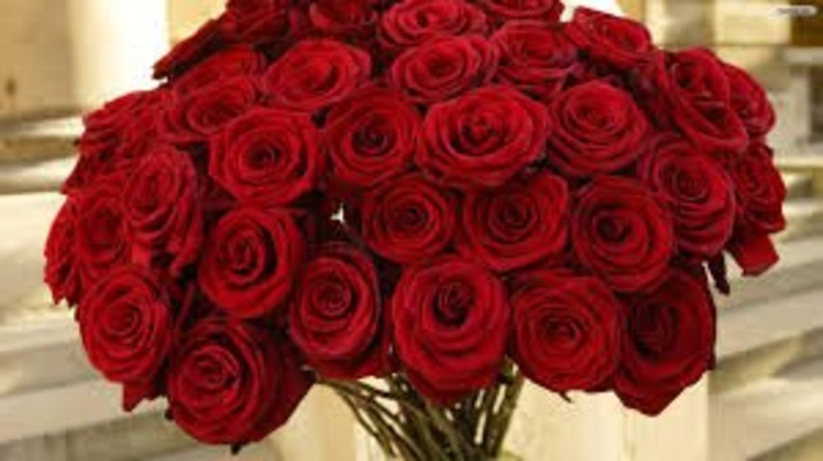 Red roses are for love and respect