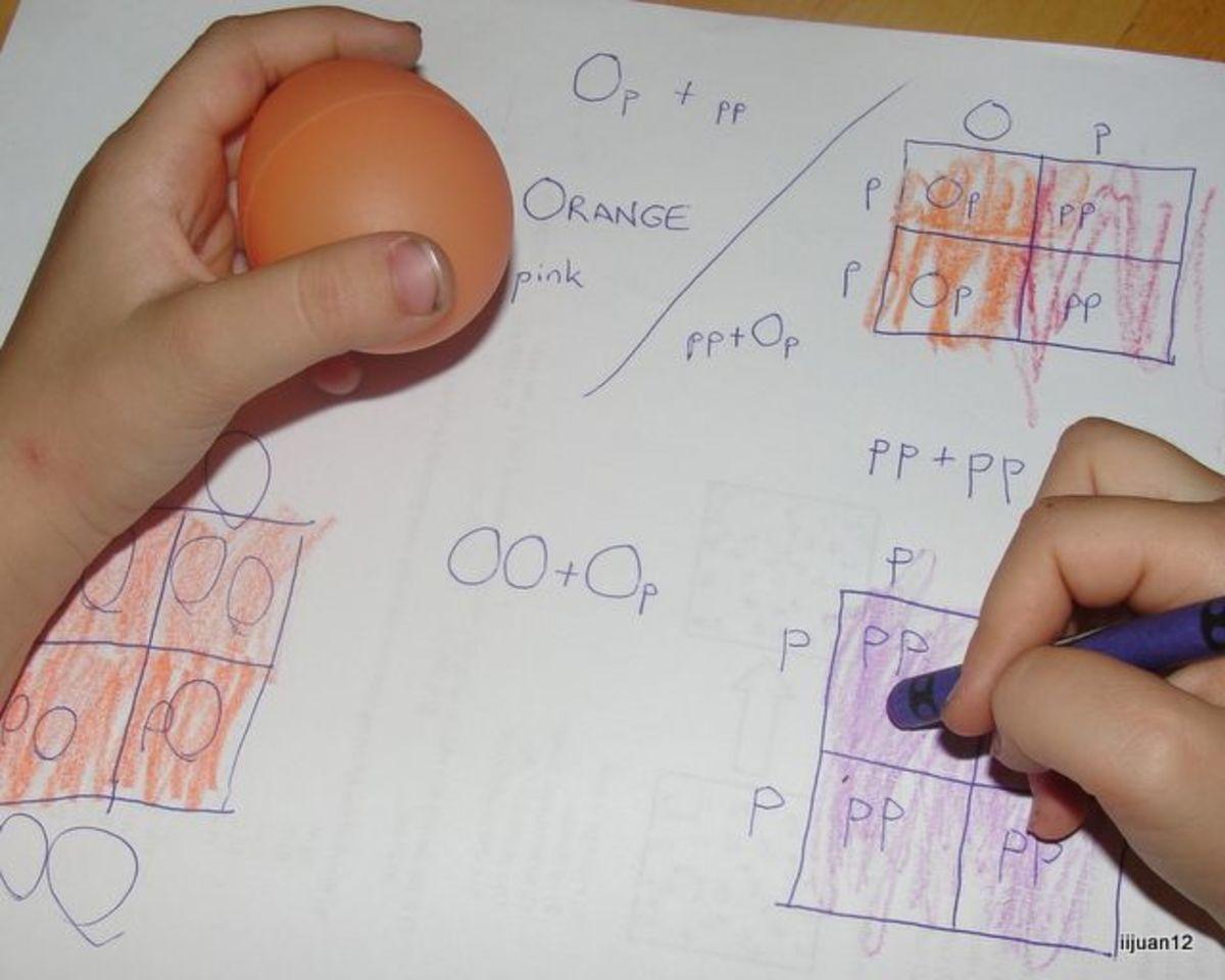 Punnett Squares Candy Egg Activity