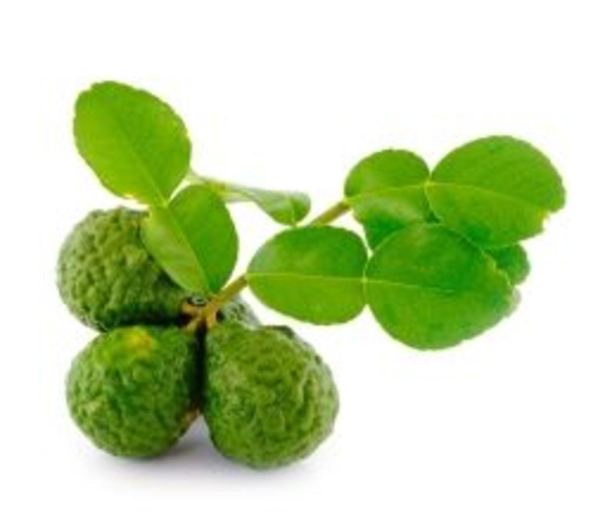 growing-the-exotic-kaffir-lime