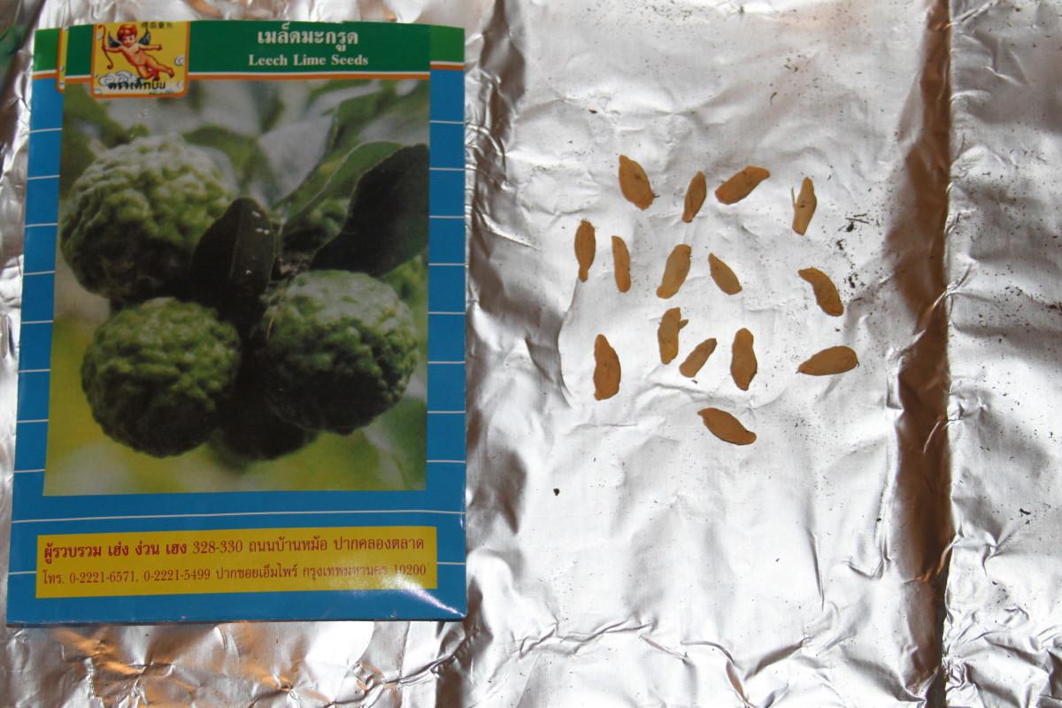 Kaffir Lime seeds.