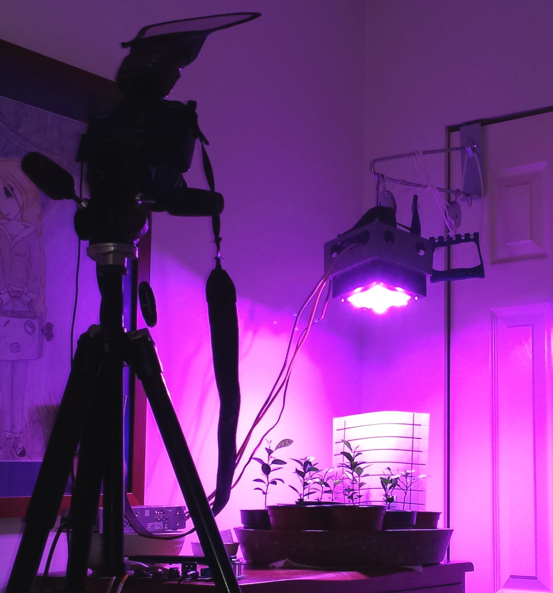 The camera is my aging Canon T1i mounted on a Manfrotto 290 Series Tripod with a white defuser on the flash unit.