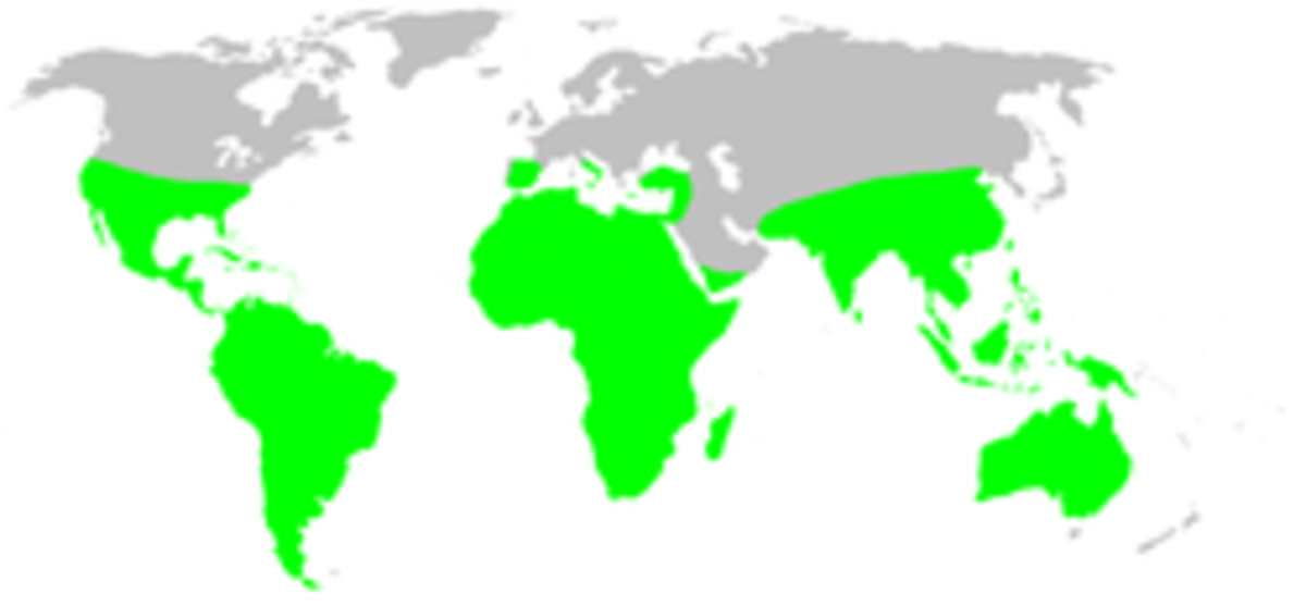 Range map of tarantula spiders.