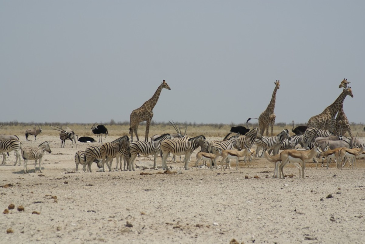 An ocean of animals near water hole