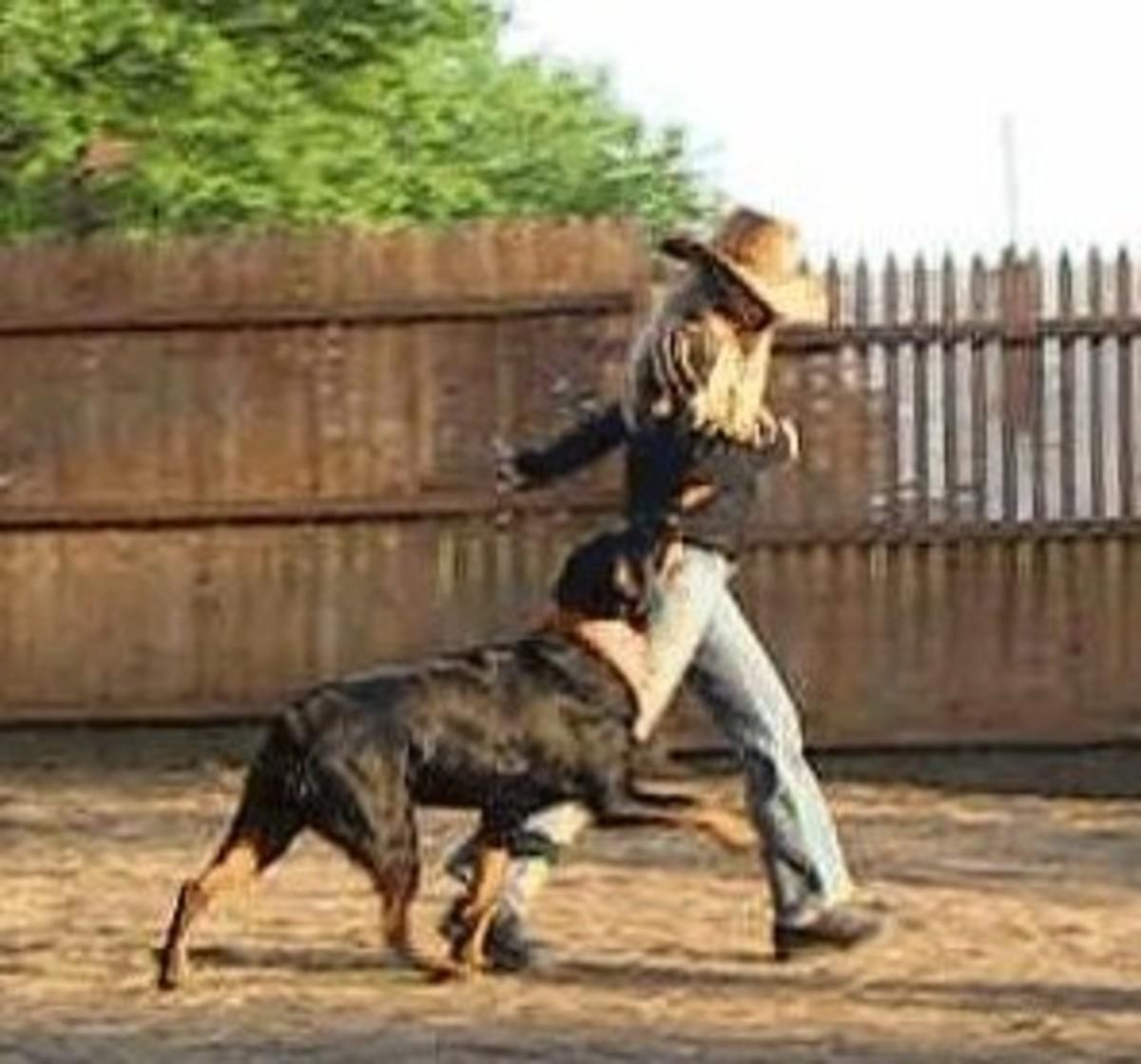 understanding-the-effects-of-aversive-dog-training