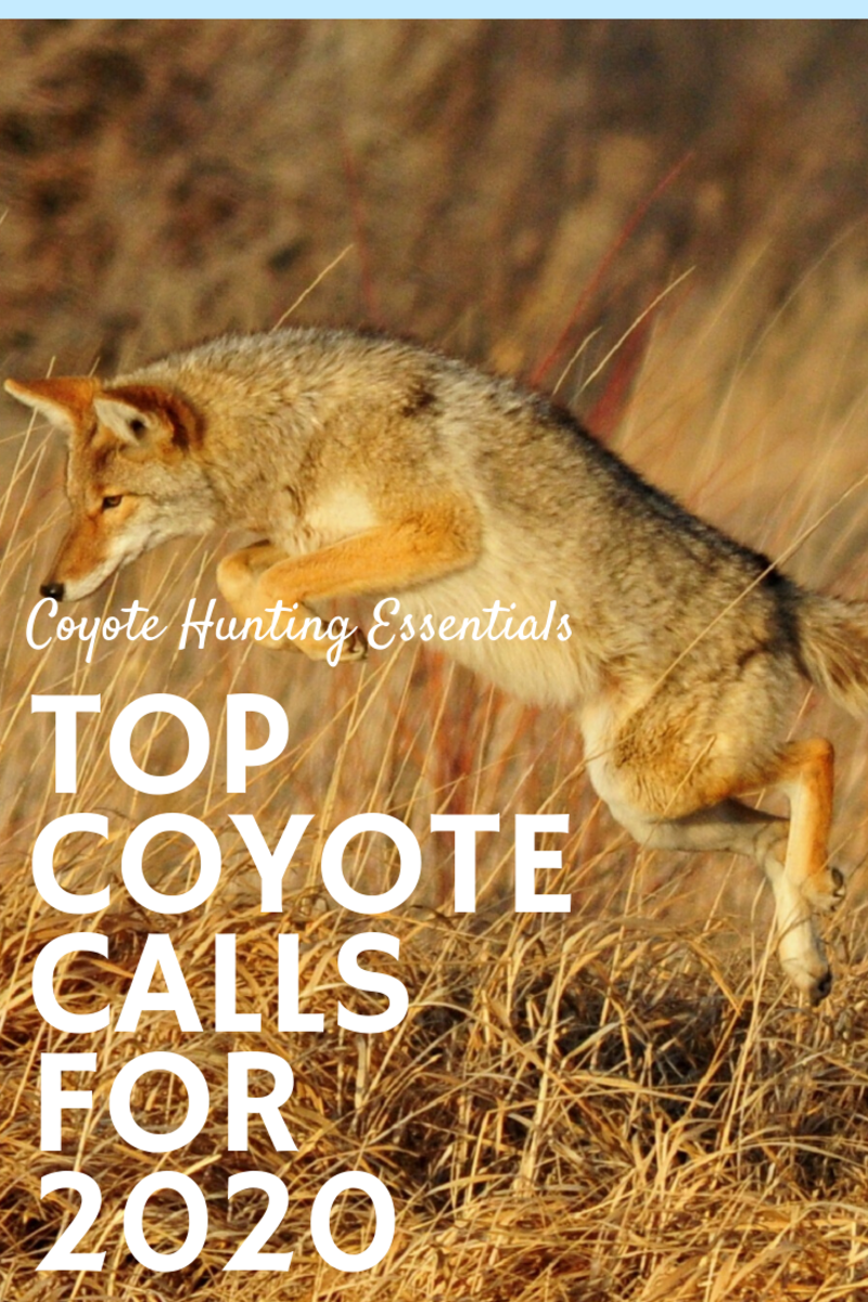 Coyote Hunting Gear: 3 Best Non-Electronic Predator Calls for 2020