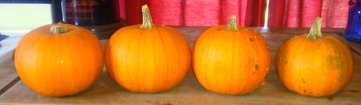 Processing and Cooking Fresh Pumpkin for Pumpkin Pie or Soup Recipes: An Illustrated Guide
