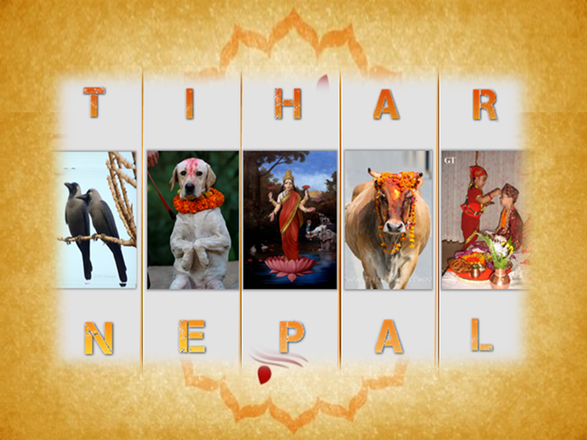Tihar the Hindus Festival of Nepal