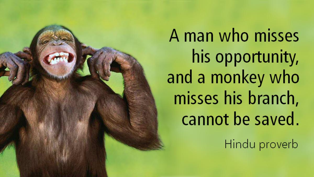 monkey-on-a-branch-a-poem