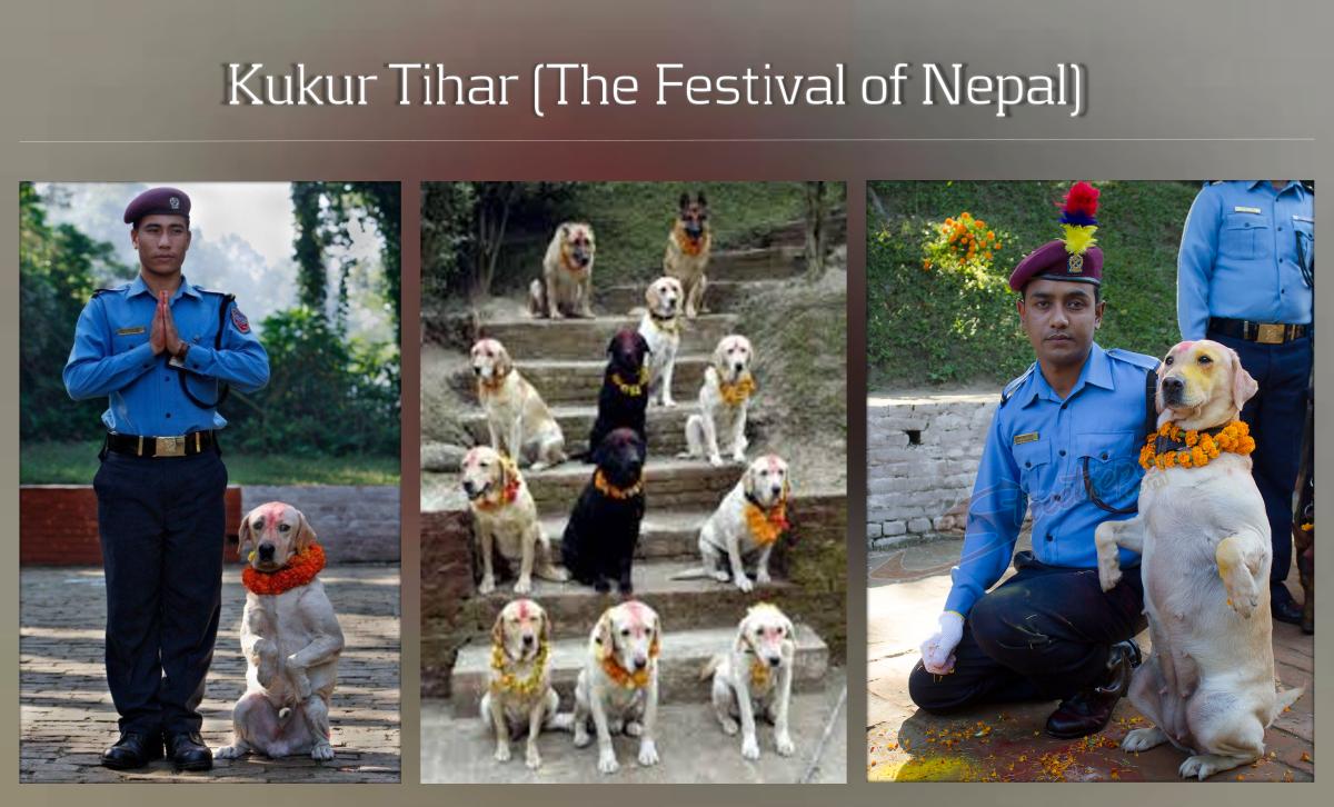 Dog worship festival of Nepal (Kukur Tihar)