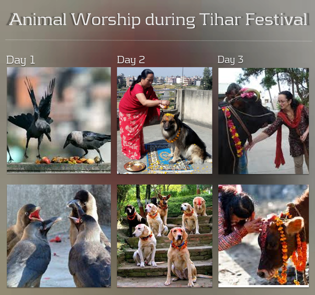 Animal Worship During Tihar Festival